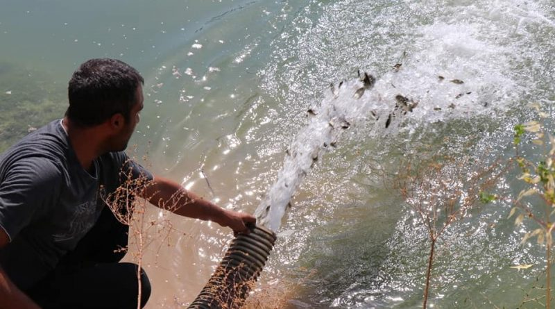 5 milyon yavru balık Fırat ve göllere bırakılacak
