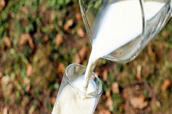 Ağustos ayında 823 bin 463 ton inek sütü toplandı