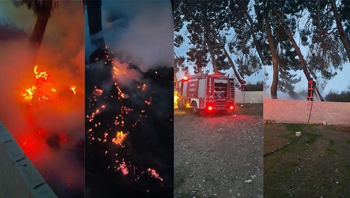 Akçakale'de çam ağaçları cayır cayır yandı! İtfaiye müdahale etti