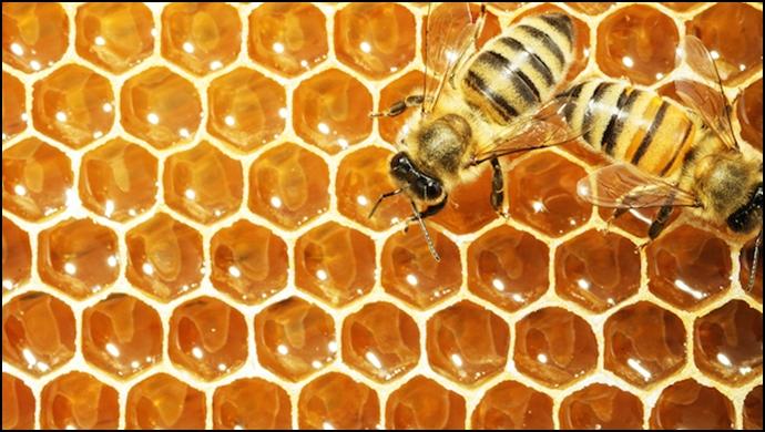 """Akçakale'deki """"Bal Arıları""""Nın Ölüm Nedeni Belli Oldu"""