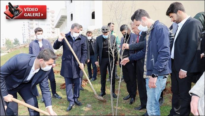 Başkan Baydilli Gençlerle Nar Fidanı Dikti