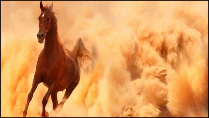 """""""Batı Nil"""" Virüsü Yarış Atlarını Tehdit Ediyor"""