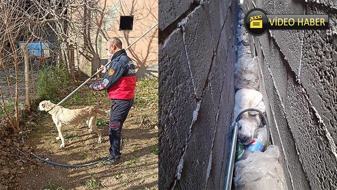 Bina boşluğuna sıkışan köpeği itfaiye kurtardı