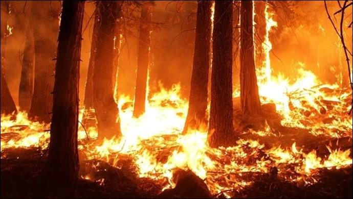 Bugün 11 ilde meydana gelen 14 orman yangınından 10'u kontrol altında