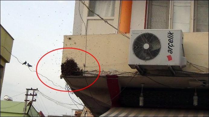 Caddeyi basan arılar, yaya trafiğini altüst etti