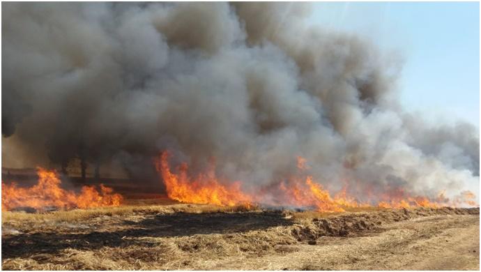 Ceylanpınar'da çıkan yangında ekipler seferber oldu