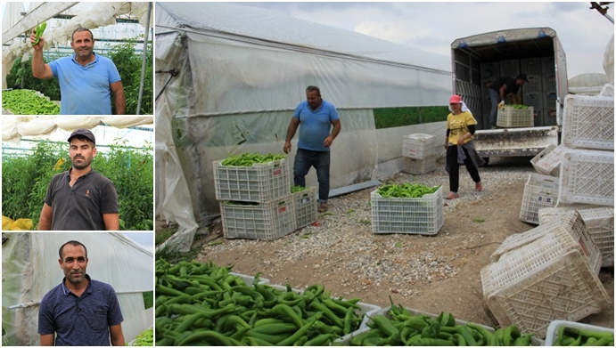 Çiftçi iflasta, işçi karın tokluğuna çalışıyor