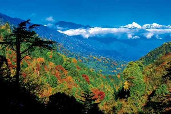 Çin'deki milli parkların büyüklüğü 230 bin kilometrekareye ulaştı