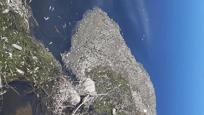 Dicle Nehri'nde toplu balık ölümü
