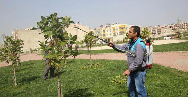 Haliliye'de Zararlı bitkilerle Mücadele Çalışması