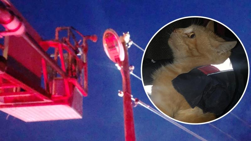 Kedi elektrik direğinde mahsur kaldı! İmdadına itfaiye yetişti