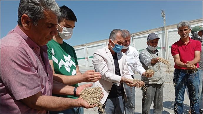 Mardin'de Yılın İlk Arpa Hasadı Yapıldı