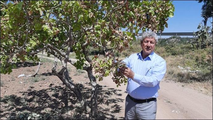 Melik: Şanlıurfa'da fıstık üreticileri kaderine terk edilmiştir
