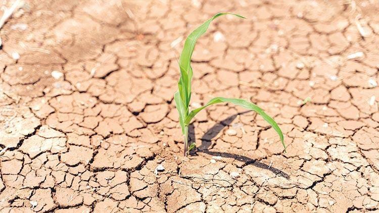 Meteoroloji raporu yayınlandı: Şanlıurfa için olağanüstü kuraklık uyarısı!