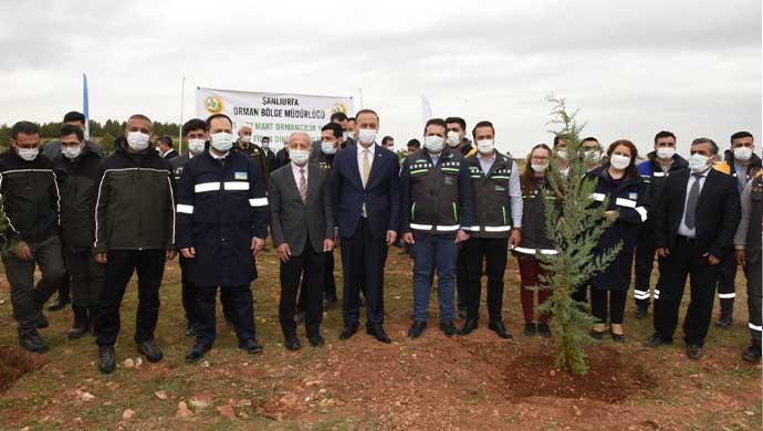 Osmanbey'de Bir Orman Oluşturuluyor-(VİDEO)