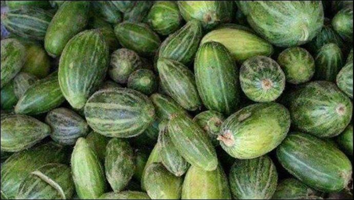 Salatalık, karpuz ve kavuna benziyor: Viranşehir'de yetiştirilen 'şelengo' tescillendi