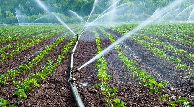 Şanlıurfa çiftçisi mağdur: 50 gelecekti 18 milyon geldi!