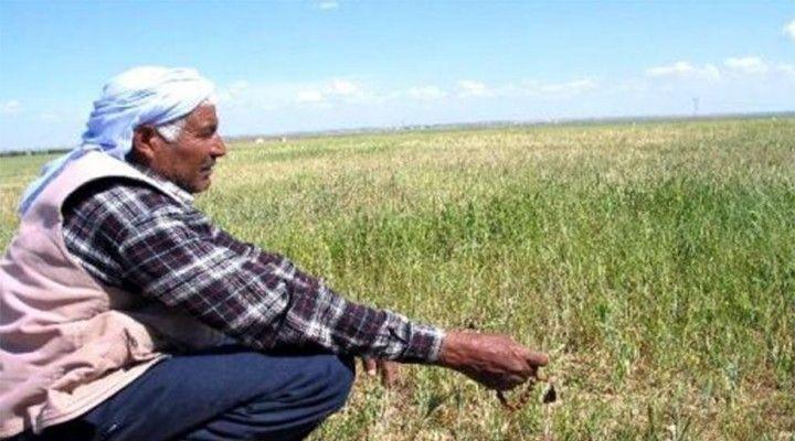 Şanlıurfa çiftçisi üretemezse ne olur?
