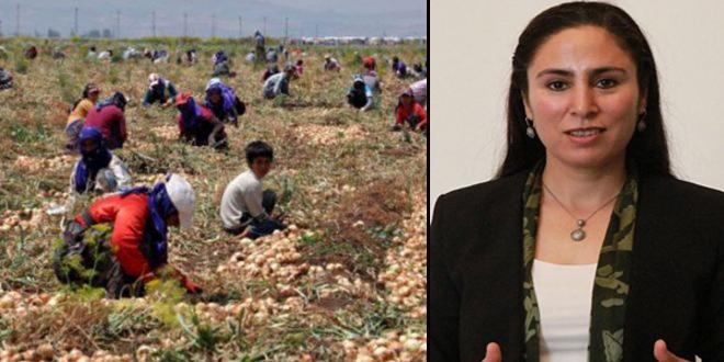 Şanlıurfa milletvekili çocuk işçilik sorununu TBMM'ye taşıdı