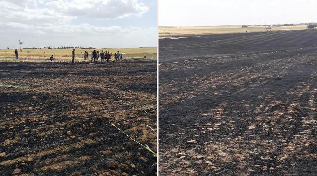 Şanlıurfa'da 300 dönüm arazi küle döndü