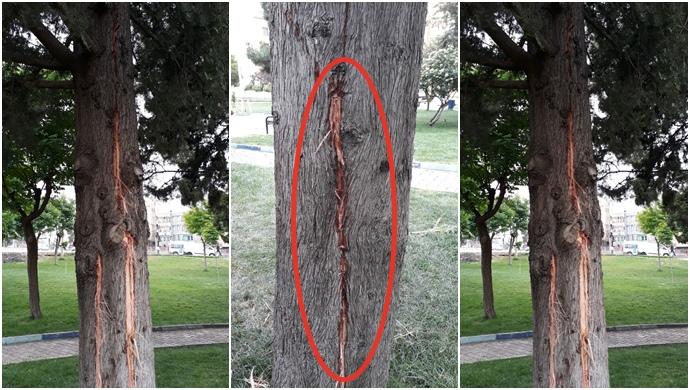 Şanlıurfa'da Ağaca Yıldırım Düştü..