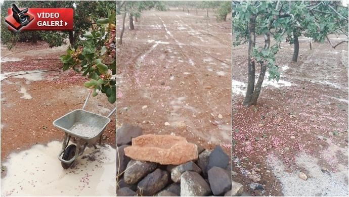 Şanlıurfa'da fıstık Bahçelerini Dolu ve Sel Vurdu
