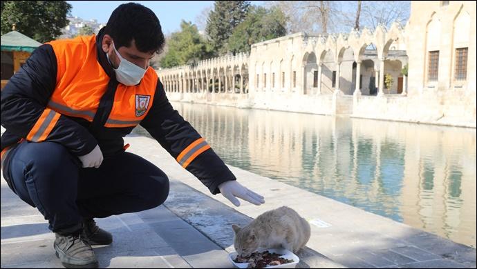 Şanlıurfa'da Hafta Sonu Sokak Hayvanları Unutulmadı-(VİDEO)