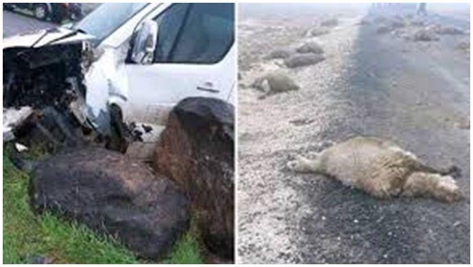Şanlıurfa'da otomobil sürüye daldı; 29 koyun telef oldu
