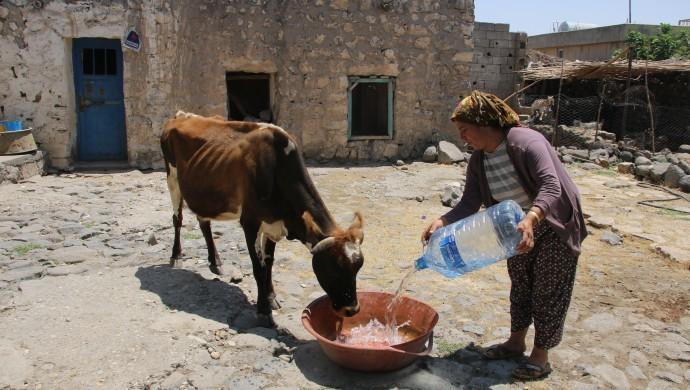 Şırnak'ta 155 haneli köy 5 gündür susuz