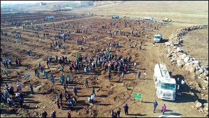 Siverek Belediyesi 10 bin fidanı toprakla buluşturdu
