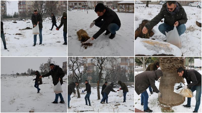 Siverek belediyesi ekiplerince sokak hayvanlarına yem bırakıldı