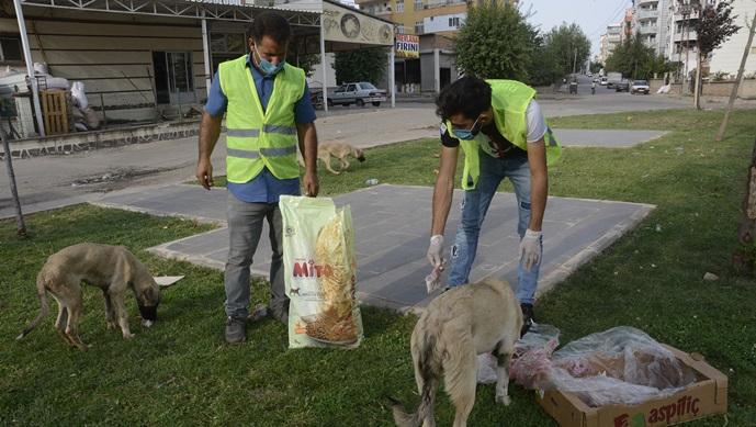 Siverek'te Sokak hayvanlarına yem bırakıldı