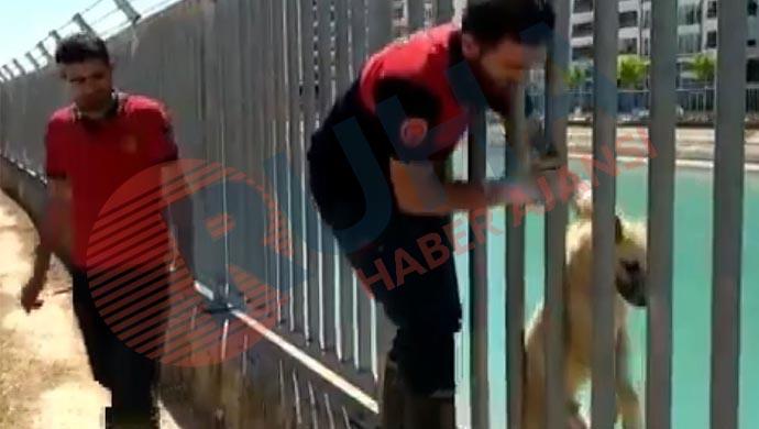 Sulama kanalına düştü: Yardımına itfaiye yetişti
