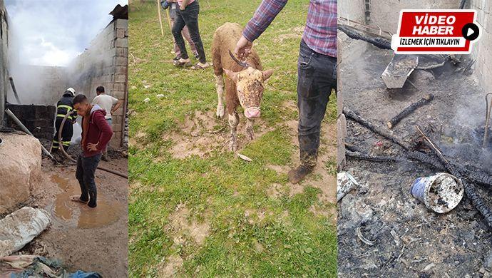 Suruç'ta ahır yangını! Bir küçükbaş telef oldu, bir dana yaralandı