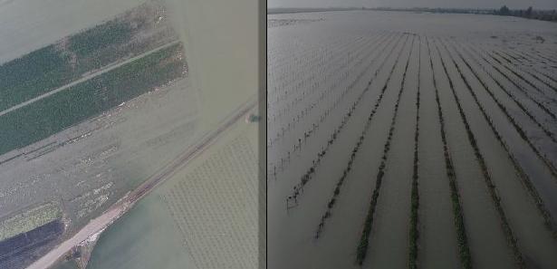Suruç'ta ana boru patlayınca araziler su altında kaldı
