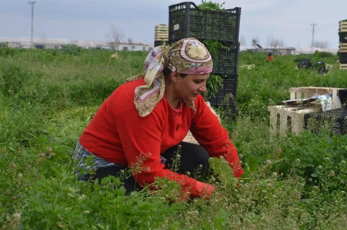 Tarım işçisi kadınlar: Sadece günü kurtarmaya çalışıyoruz