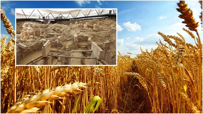 Tarımın başlangıcı Göbeklitepe'ye dayanıyor