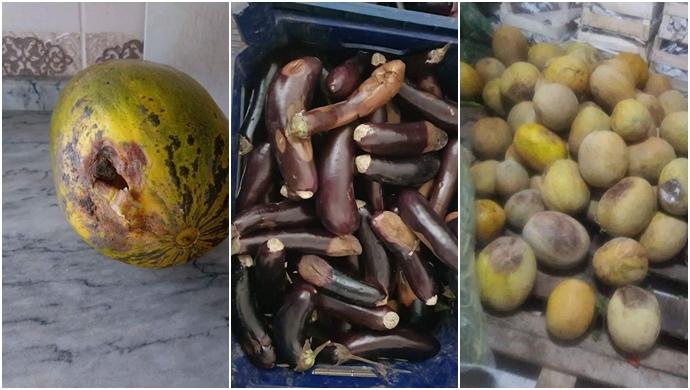 TİGEM'de Yemek ve Mesai Rezaletine Öz Orman-İş Sendikasından Tepki