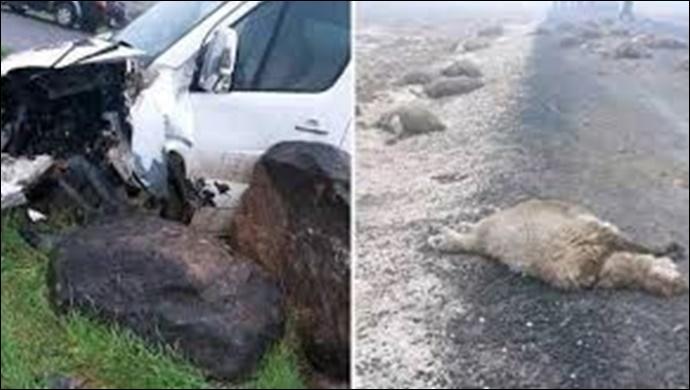 Urfa'da hafif ticari araç sürüye daldı: 10 koyun telef oldu