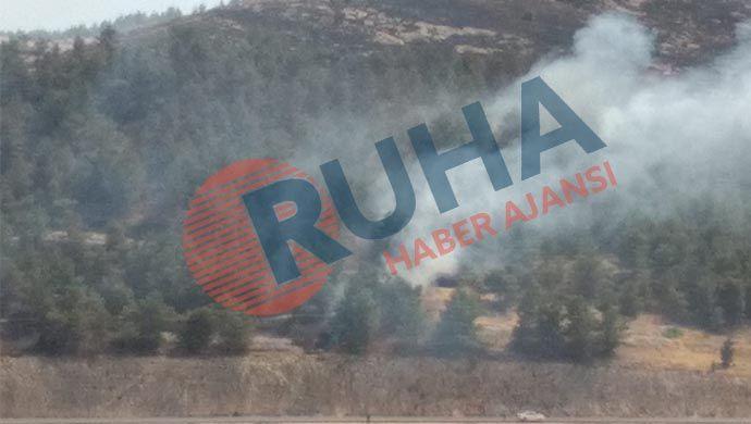 Urfa'da orman yangını: Dumanlar metrelerce yükseldi-(VİDEO)