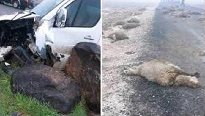 Urfa'da otomobil sürüye daldı: 40 koyun … 2 Yaralı
