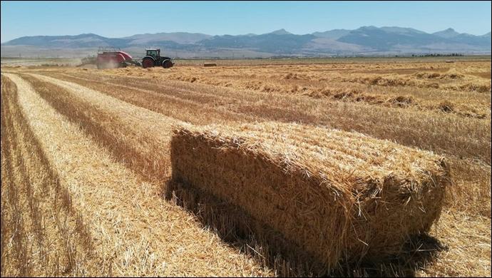 Urfa'da saman fiyatları aldı başını gitti! Hem çiftçi hem esnaf tedirgin