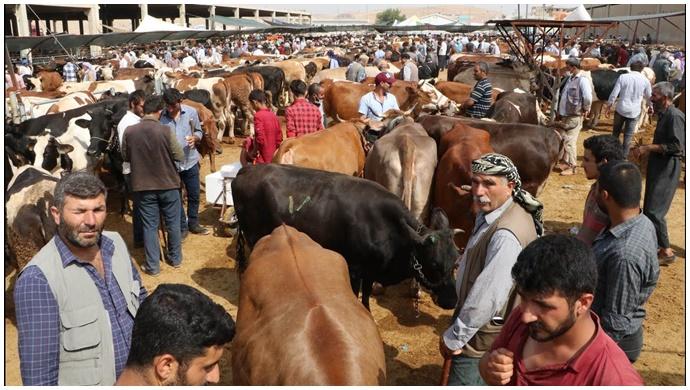 Vatandaşlar yola düştü: Hayvan pazarında arefe günü hareketliliği