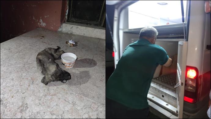 Yaralı köpeğe Urfa Büyükşehir Belediyesi ekipleri sahip çıktı-(VİDEO)