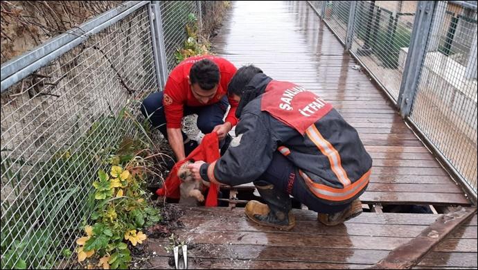 Yavru köpek Karakoyun Deresi'ne düştü! Ekipler yardımına koştu