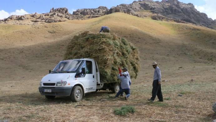 Yaylalarda biçilen otlar köylere taşınıyor