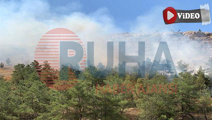 Yine Şanlıurfa, yine orman yangını!