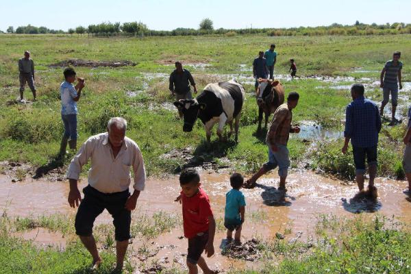 Suruç'ta taban suyu yükselen mahallenin sakinleri tedirgin